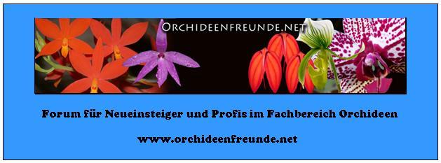www.Orchideenfreunde.net
