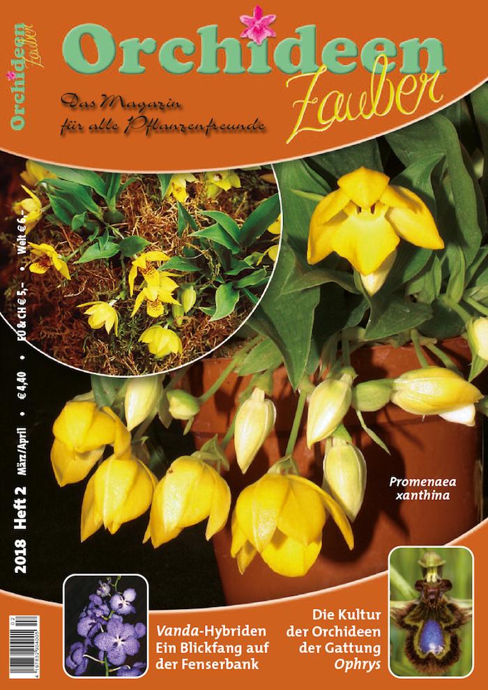Orchideen Kopf orchideen zauber magazin kopf orchideen